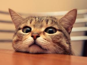 Cute-Cat-Photos-wallpaper
