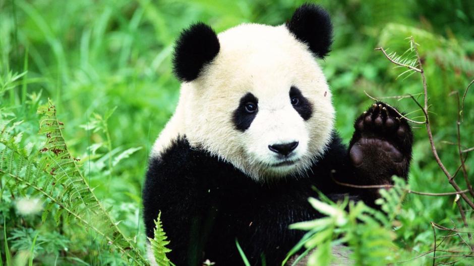 pandas-live_64dff22c2fe56e9